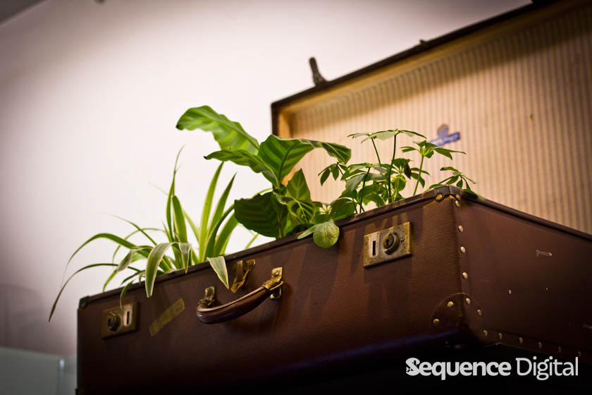 10 sq m Geelong - Suitcase of plants