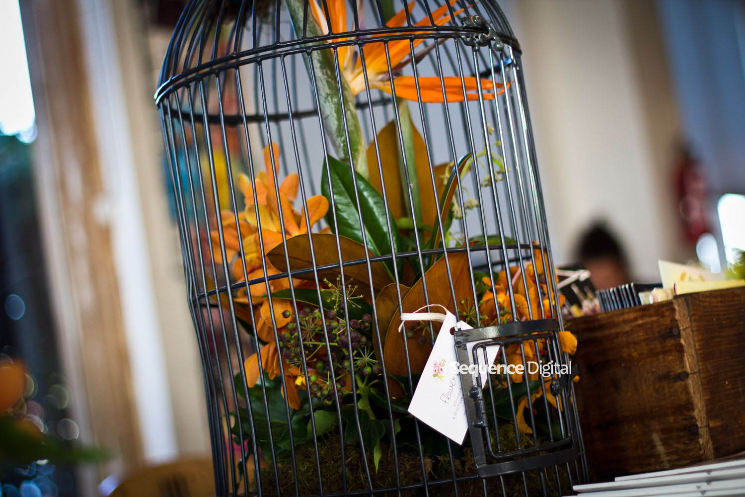 63 Degrees Cafe Geelong - Birdcage and Flowers from Flower Bowl Geelong